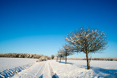 White winter trees covered in snow (OR_U) Tags: blue trees winter sky white snow germany landscape shadows bluesky oru 2016 helmstedt