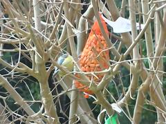 DSC02034 (Enrico Luigi Delponte) Tags: birds sony vogels uccelli sonyfuncamera