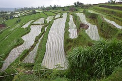 Ricefields at Jatiluwih (Andreas' Photos) Tags: bali ricefields jatiluwih