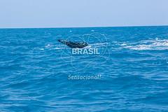 NE_Abrolhos0080 (Visit Brasil) Tags: horizontal brasil fauna natureza bahia nordeste detalhe externa abrolhos semgente diurna