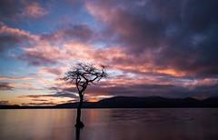 Loch Lomond (Borderli) Tags: longexposure sunset tree scotland lochlomond millarochybay