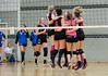P1301051 (roel.ubels) Tags: sport mare 8 flamingos pica volleyball apollo 56 volleybal 2016 topsport gennep ecare topdivisie