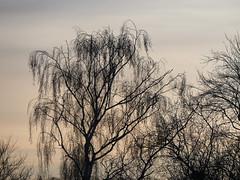 Ciel d'hiver - Winter's sky (p.franche) Tags: park winter brussels sky tree nature europe belgium belgique hiver bruxelles pale panasonic ciel dxo brussel arbre parc hdr schaarbeek schaerbeek belge ple parcjosaphat josaphatpark fz200 pascalfranche pfranche