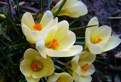 PIC_0070 (lilired) Tags: excellentsflowers thebestofmimamorsgroups greatshotss doublefantasy esenciadelanaturaleza magicmomentsinyourlife onlythebestofflickr naturesplus