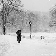Memories of a Blizzard (CVerwaal) Tags: nyc winter blackandwhite snow centralpark umbrellas turtlepond olympusem5 lumixgvario1235mmf28