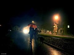 Heavy rain (Ren Mollet) Tags: street light dog color rain lady night umbrella nightshot streetphotography dogwalk haevy renmollet