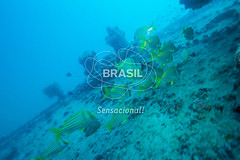 NE_Abrolhos0014 (Visit Brasil) Tags: horizontal brasil fauna natureza bahia nordeste externa abrolhos semgente subaqutica diurna