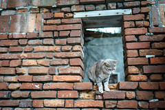 What are you thinking? (kivx) Tags: cat lens sony fe a7 鹿港 α7 ilce7 sel3514z