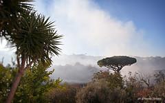 Sant'Agata sui due Golfi (NIKOZAR (Nicola Zaratta)) Tags: nikon campania nebbia albero pino palma fumo costieraamalfitana nikond90 santagatasuiduegolfi