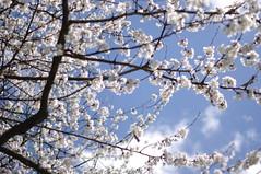 (Ludmila Leonie) Tags: flowers sun france love nature beauty pen fleurs happy spring nice soft peace branches softness jardin amour beaut promenade lovely magnifique feuilles plantes joli prin sunnydays pentax50mm pentaxk20d pentaxart