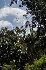 At Jungle Park (Fjola Dogg) Tags: vacation espaa holiday canon island zoo spain europe tenerife evropa junglepark evrpa fjoladogg fjladgg canonpowershotg7x canong7x
