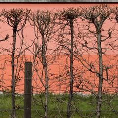 Three horizontal stripes (zeh.hah.es.) Tags: orange green fence schweiz switzerland zurich rosa hedge grn zrich zaun faade ros fassade hecke