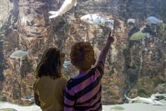 Plongez dans notre galerie de 20 aquariums o vivent plus de 50 espces de poissons (domainevendresse) Tags: famille aquarium ardennes poisson enfant domaine carpe vendresse brochet esturgeon parcdeloisirs