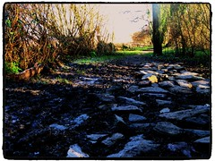 Frosty Stones (Alexander Mabe) Tags: trees sun hot cold frost shadows shine bright stones marsh