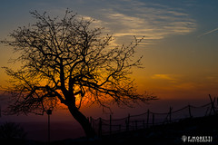Istria (francesco12corde) Tags: sunset tree nature croatia francesco istria moretti francesco12corde