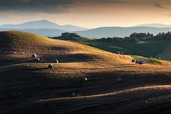 Colline toscane (P) Tags: italy landscape italia hills campagna tuscany bales toscana paesaggio colline senese rotoballe