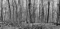 Jans prille Lente (peterbastingsfotografie) Tags: staatsbosbeheer middenlimburg demeinweg peterbastings dedoort leica35mmsummicronmasphf20 middelsgraaf susterenecht