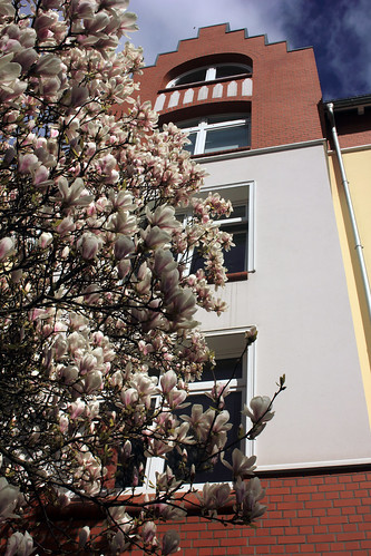 """Magnolienblüten (04) • <a style=""""font-size:0.8em;"""" href=""""http://www.flickr.com/photos/69570948@N04/26011424314/"""" target=""""_blank"""">View on Flickr</a>"""
