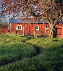 The Winding Path to Spring - Boulder County, Colorado (Bryan Harding - Outside the Box Design Studio) Tags: flowers window field barn spring colorado path longmont shed meander agriculture plains frontrange hygiene redbarn fruittree easterncolorado bouldercounty