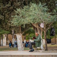 isr2_32 (L'esc Photography) Tags: israel jerusalem olivetree templemount harameshsharif oldcityofjerusalem  harhabyit koranstudy  mountofthehouse