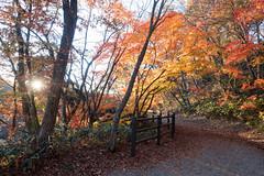 NarukoOnsen-71 (clouddra) Tags: autumn japan jp miyagiken narukogorge narukoonsen sakishi