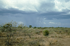 Rain over the australian bush (Stefan Ulrich Fischer) Tags: travel abandoned 35mm landscape outdoor oz australia slide scanned outback analogue southaustralia downunder nullarbor kodakektachrome minoltaxd7
