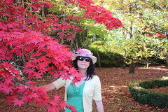 Japanese Maple (Acer palmatum) (Poytr) Tags: plant garden outdoor australia bluemountains japanesemaple acer nsw acerpalmatum redleaves greatgatsby mountwilson sapindaceae mountwilsonnsw chensmallbird greatgatsby2013 greatgatsbymovie2013