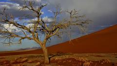 Tree in desert (flowerikka) Tags: sunset tree clouds desert dune sossusvlei namib dune45