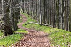IMG_3210 (Tobwie) Tags: landscape spring forrest path sunny clear sonnig landschaft wald weg frhling pfad klar badiburg frhblher freeden