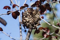 Argentinien_Insekten-95 (fotolulu2012) Tags: tierfoto