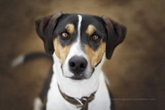 Hola Sam! (alessandrafavetto) Tags: dog pet pets color dogs horizontal outdoors dogphotography petphotography dogportrait petphotographer dogphotographer