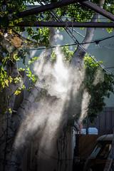 Mist (EvanJawnson) Tags: trees light sunset arizona sunlight mist tree 50mm nikon sunday scottsdale nikkor sunrays sunray lightstreaks goldwater sunstreaks sundayfunday misters niftyfifty brathaus d7100 nikond7100