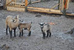 DSC_0077 (Rinswid) Tags: park nature animal spring kharkov feldman ecopark