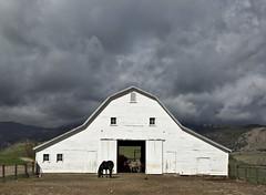 not a care in the world (eDDie_TK) Tags: rural colorado farming barns co farms rurallife ruralliving bouldercounty whitebarns bouldercountyco