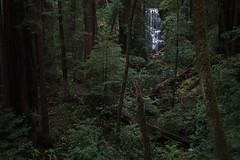 Strands (zh3nya) Tags: california park trees northerncalifornia forest dark outdoors waterfall woods alone gloomy hiking atmosphere eerie falls bayarea d750 redwoods solitary bigbasin sfbay dense berrycreekfalls wooded bigbasinstatepark californiastateparks sigma35mmf14