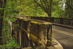 Mossy bridge (MacaPDX) Tags: road bridge trees usa oregon creek forest canon moss unitedstates roadtrip columbiariver pacificnorthwest pnw columbiagorge mossy t3i latourellfalls latourell columbiariverhwy latourellcreekbridge mossybridge oregonwonders