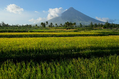 Looming over the fields. Mt Mayon (Laura Jacobsen) Tags: volcano philippines mtmayon legaspi legazpi mayonvolcano