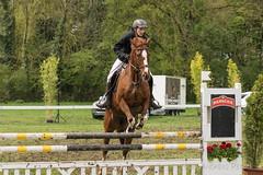DSC09672_s (AndiP66) Tags: horse sports sport schweiz switzerland sony luzern september gelb bern alpha concours pferd equestrian ch horsejumping wettbewerb 2016 springen f456 hindelbank kantonbern pferdesport sonyalpha springreiten cantonberne jegenstorf wolhusen andreaspeters jegensdorf pferdespringen grueb sony70400mm martinameyer 77m2 sal70400g2 sony70400mmf456gssmii a77ii ilca77m2 77ii 77markii slta77ii 23april2016