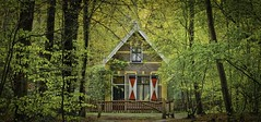 Study of house in the woods (ParadoX_Design) Tags: wood red white house holland tree brick nature dutch architecture forest path small cottage shutters