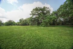 Canon206512_mantiuk06 (godrudy6661) Tags: neworleans audubonpark treeoflife oaktrees
