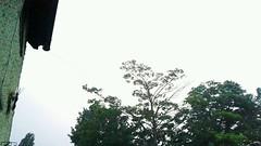 20150704_004431_70566 (Ric Lander) Tags: july lightning 2015 wilburyrd setenglandhols15