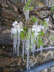 Catastrophe naturelle (Grand-Papp, charrette...) Tags: snow ice nieve neige hielo auvergne glace massifcentral hauteloire margeride hautesterres lobe marjarida nu