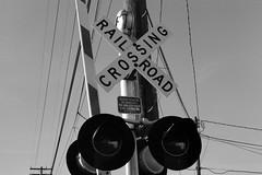 Crossing (samdabull) Tags: blackandwhite om1 olympusom1 50mmf14zuiko