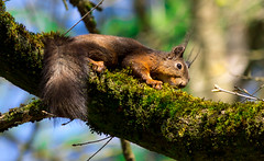 spring! (Florian Grundstein) Tags: tree cute bayern nager squirrel bokeh struktur olympus panasonic florian baum rinde oberpfalz eichhrnchen niedlich schrfentiefe wildpark grundstein freilaufend teublitz hllohe