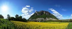 La Savoyarde (yoduc73) Tags: fleurs montagne alpes savoie printemps vigne colza baugnes