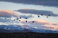 Ascension (anova9) Tags: new mountain mexico dawn geese