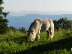 Pony reiten am Bauernhof