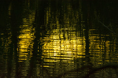 20160116-35_Coombe Country Park_Dusk Reflections (gary.hadden) Tags: trees sunset reflections dusk calm coombeabbey coombecountrypark coombepark