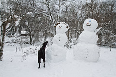 Eyes on the Carrot (brucetopher) Tags: winter dog pet pets snow beautiful beauty puppy landscape snowman lab labrador blackdog snowmen retreiver labradorretriever pup beautifuldog snowpeople snowscape winterscene rescuedog dogrescue mrsnowman mrssnowman coldwinterlandscape louisianarescuedog
