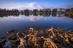 Roots in the lake (Dtek1701) Tags: longexposure sky orange reflection tree nature water outside fuji riverside outdoor roots naturallight wideangle slowshutter southerncalifornia ultrawide fujinon foreground fairmountpark inlandempire xseries apsc mirrorless remotetrigger lakeevans 10stopndfilter bwndfilter xshooter benrotripod xflens xtranssensor fujinonxf1024f4ois